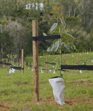 new_planting2 - website